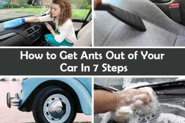 How to Get Ants Out of Your Car